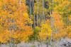 Aspen Grove, Lundy Canyon