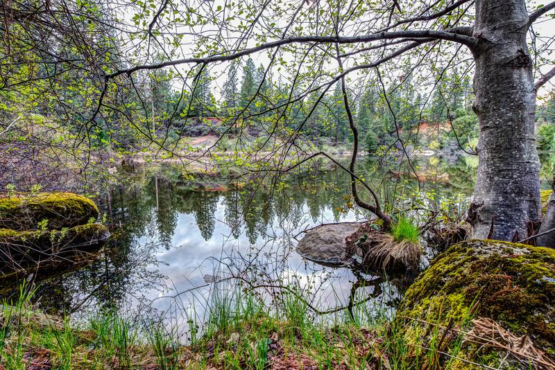 Shoreline, Hirshman's Pond