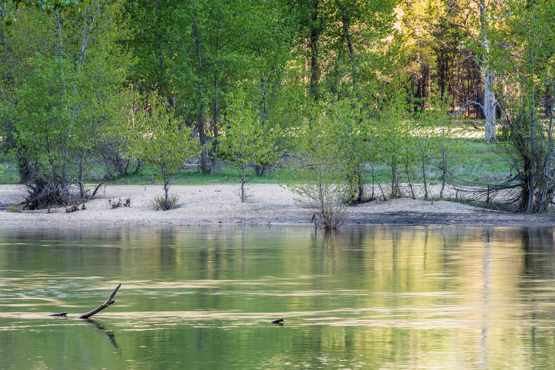 new green leaves, Merced River in Yosemite Valley