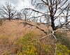 Juniper ghost grove, Hwy 395