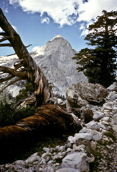 Peak and snag, high sierras