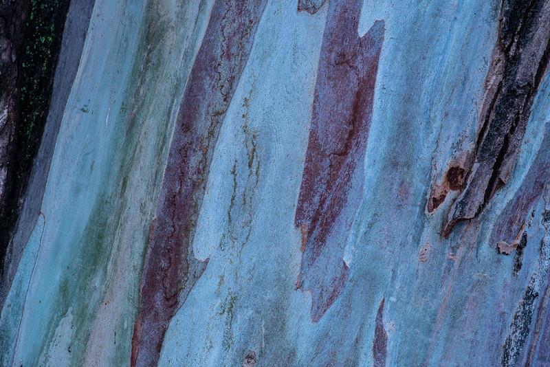 Eucalyptus bark detail