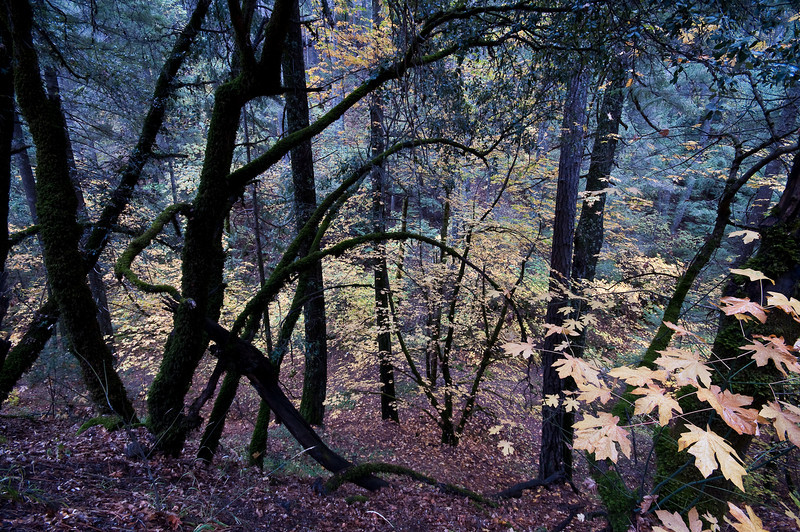 Fall woods, Nevada County