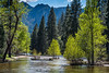 springtime in Yosemite Valley, Merced River