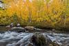 Bishop creek and fall aspens
