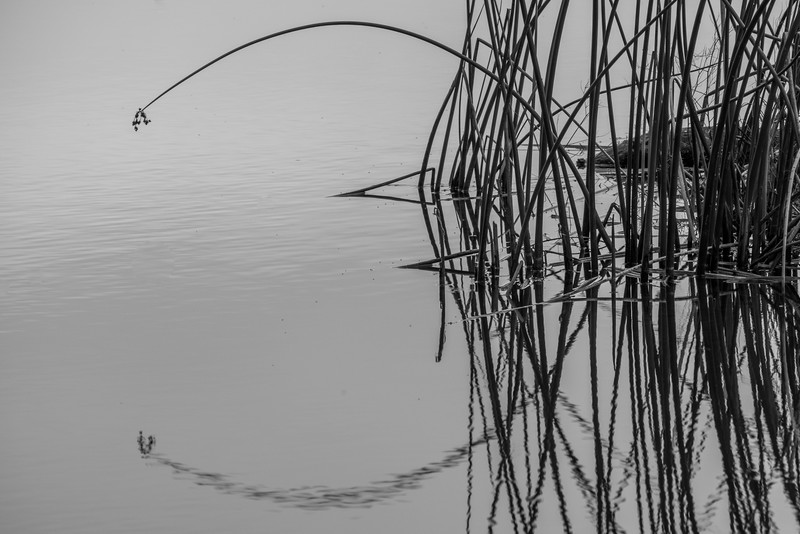 Circle and Lines - reflections of reeds