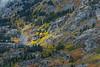 High Sierra aspen groves