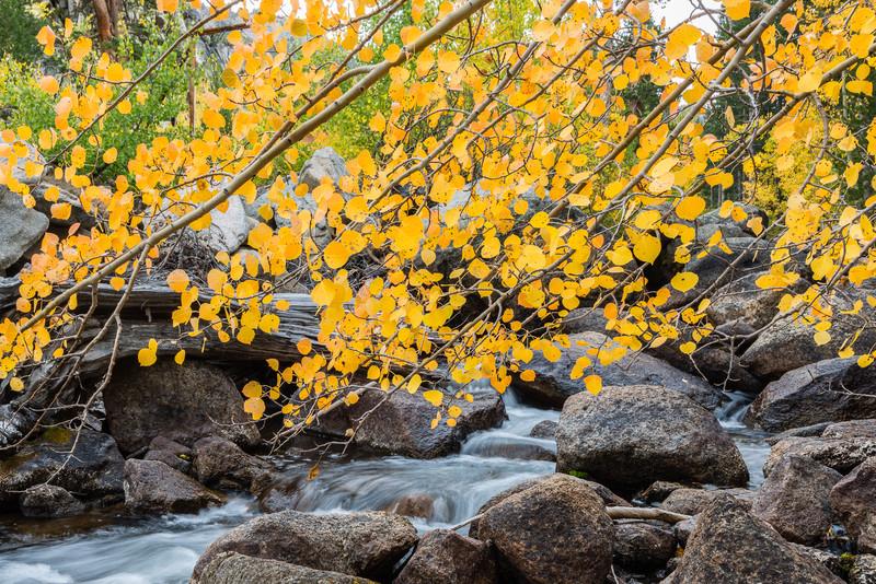 Bishop Creek and fall aspen
