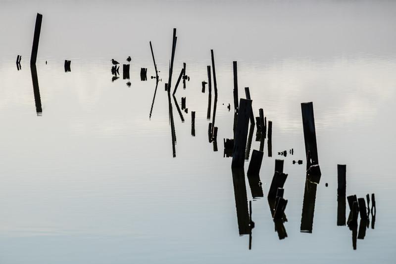Piling reflections at San Francisco Bay