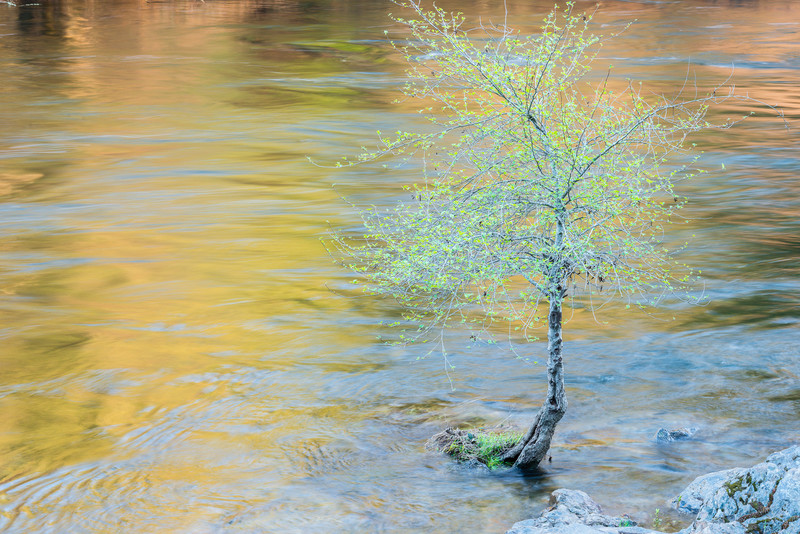Mokelumne River and tree at sunset