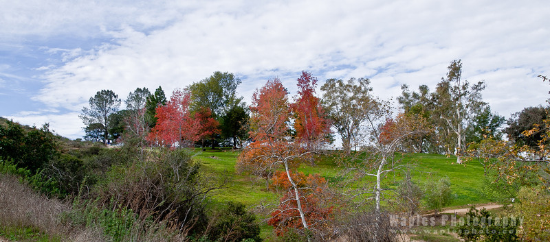 Fall Colors, Lake Poway