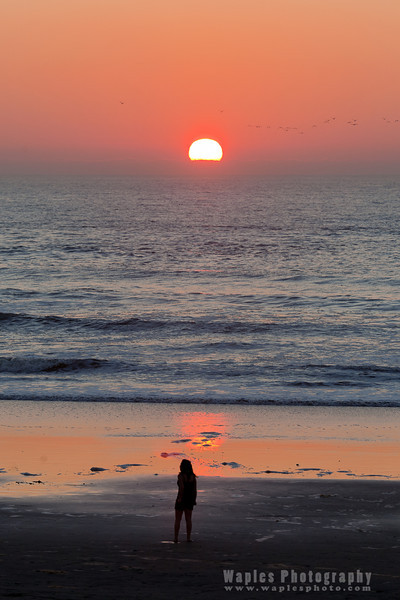 Skein of Seagulls at Sunset, Torrey Pines State Beach