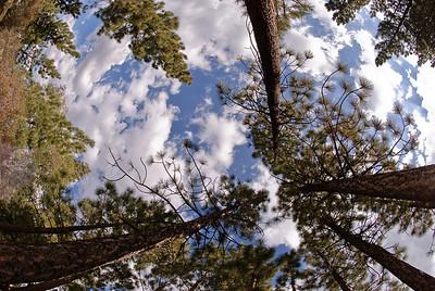 2008-09-27 Big Bear-8134