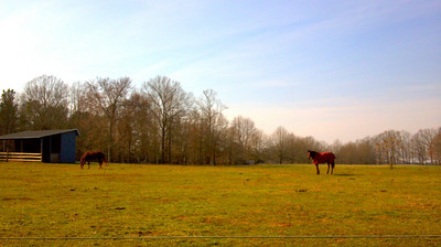 From around my farm during my jog.  Scout and Cotten.