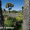 ripley woodland park-5