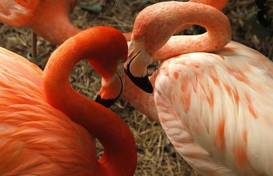 Heart Location: D.C. Zoo
