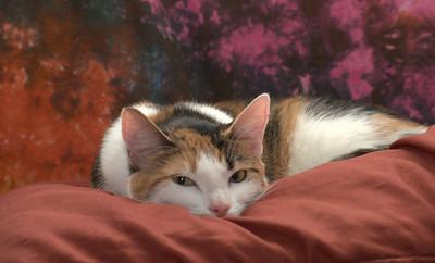 My cat Marley