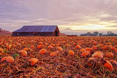 Pumpkins Jacksonville Oregon