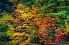 Autumn leaves - Ashland State Park