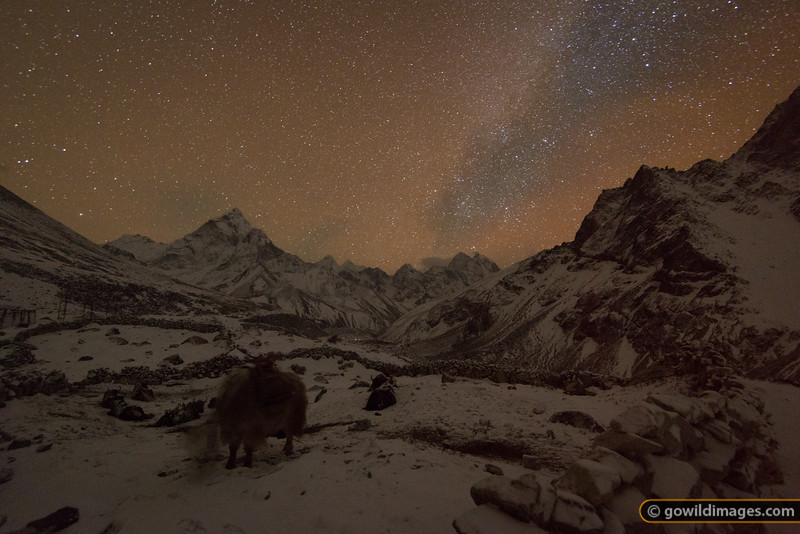 Yaks sleep and graze through the light snow as the Milky Way illuminates the surrounding ranges. Ama Dablam is the larger peak left of centre.