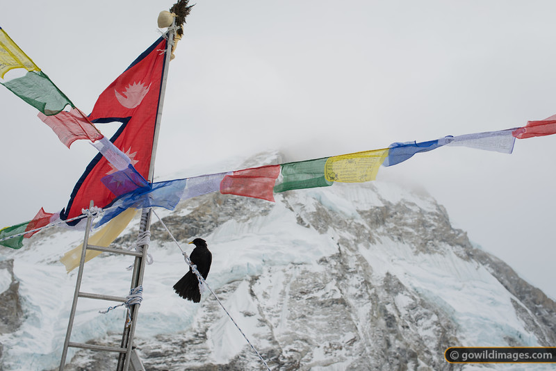 Nepal flag adorns a ladder at the Icefall Doctors' chorten at base camp