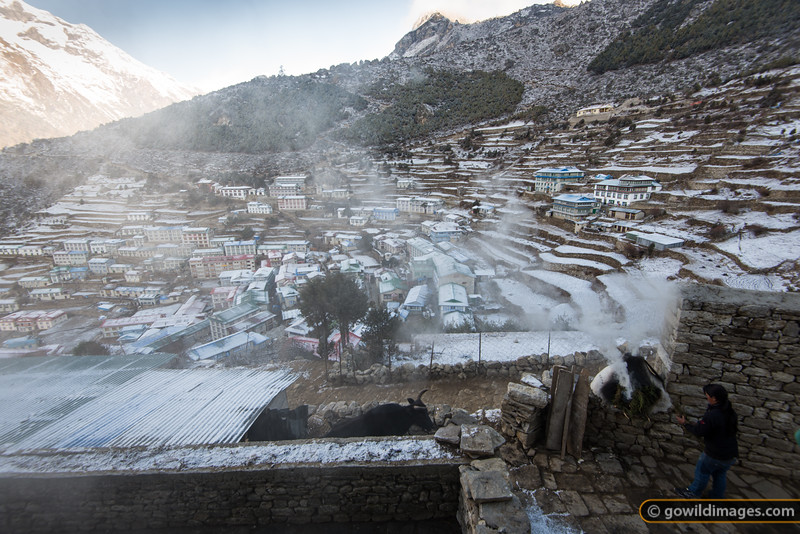Light Spring snow dusts Namche overnight. The morning ritual includes burning juniper or fir branches as an offering to the gods. The resident dzopkyo (buffalo-cow-yak hybrid) is let out from the shed to graze.