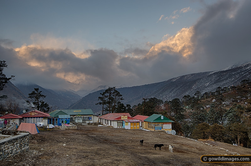 Dogs at play in Tengboche late afternoon