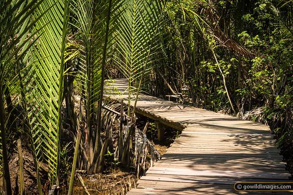 Mangrove walk, Pulau Ubin
