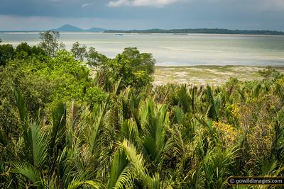 Mangrove walk, Pulau Ubin with view towards Indonesia