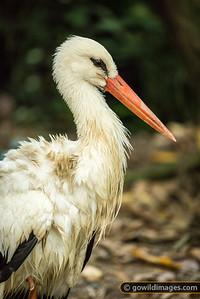 One-legged stork