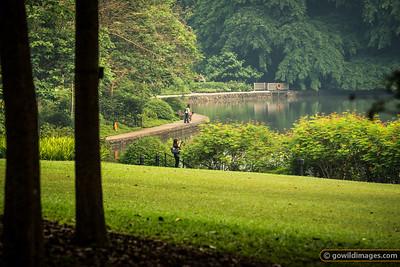 Swan Lake, Botanic Gardens