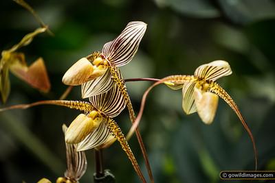 Orchids, Botanic Gardens