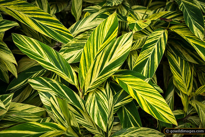 Leaf detail, Botanic Gardens