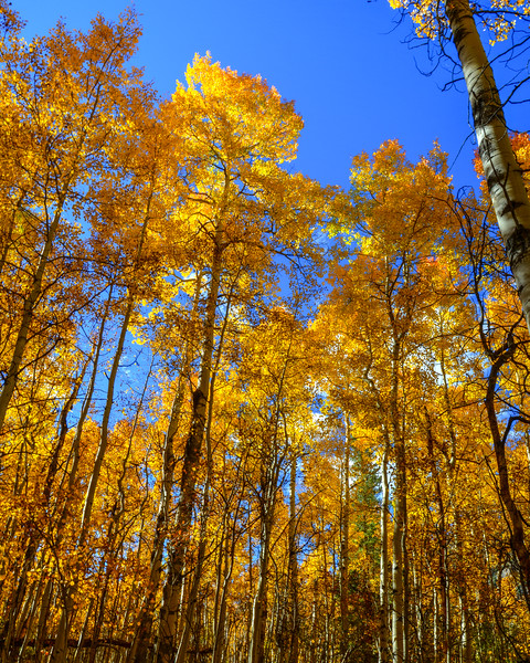 Denver and Aspen Mountain Passes (18 of 27)