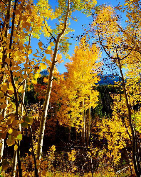 Denver and Aspen Mountain Passes (25 of 27)