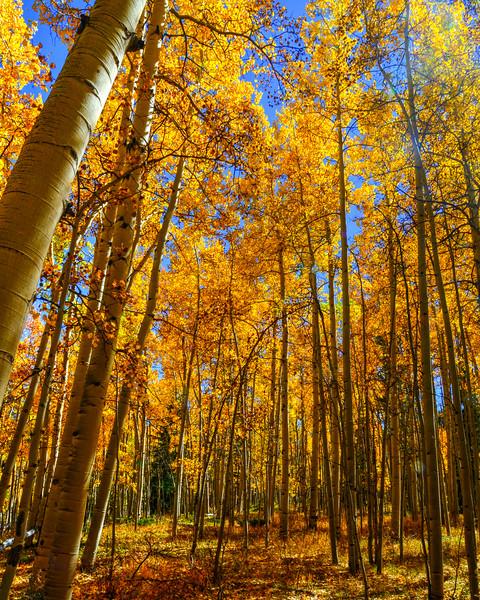 Denver and Aspen Mountain Passes (12 of 27)