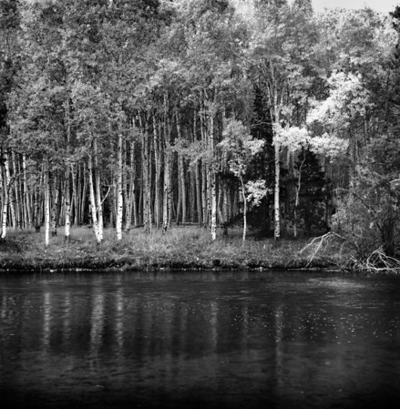 Aspen Grove and River #1 - Eastern Sierras 2012