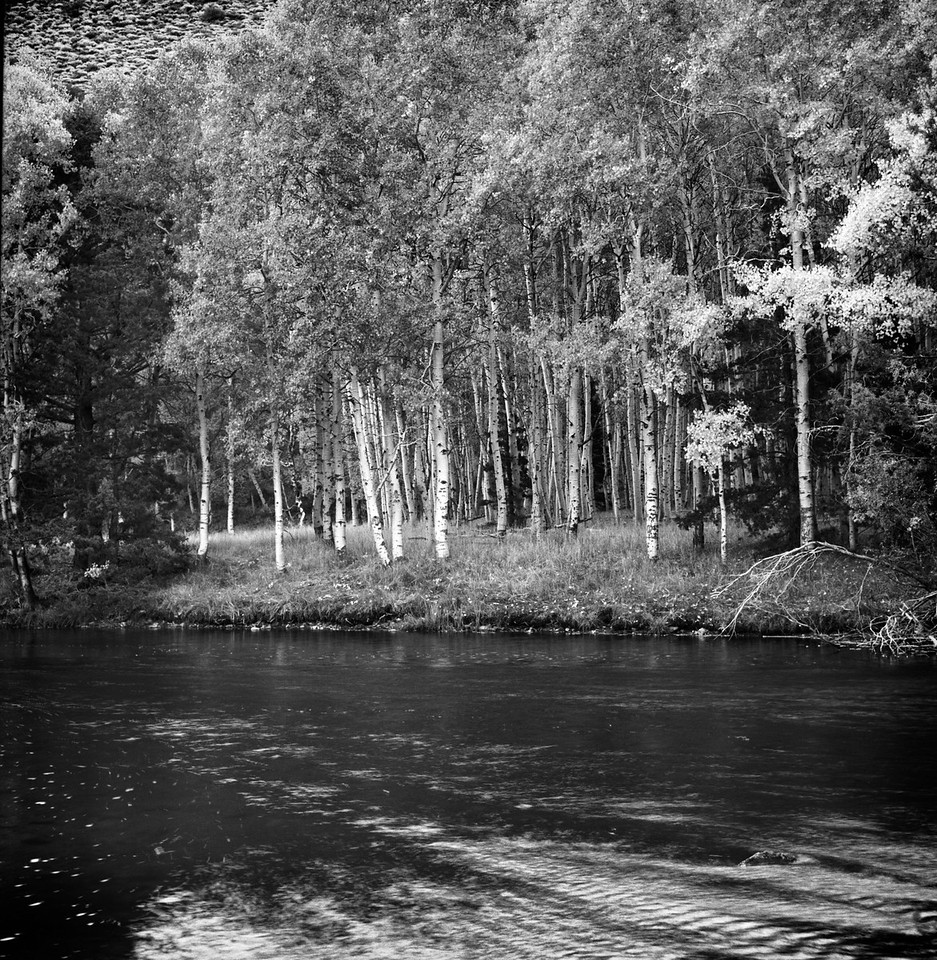 Aspen Trees and River - Eastern Sierras 2012