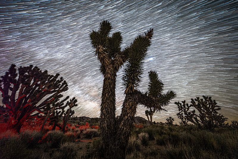 DAY 4 - JUPITER, STAR TRAILS AND JOSHUA TREES   Jupiter, star trails and Joshua Trees  Once done with the shot of the Milky Way over the Joshua Trees, I turned all the shots that I sequentially took into a shot of star trails.  The prominently shining Jupiter now has a trail, as if it got caught while traversing across the heavenly body. It is the one protruding sideways from the right side of the Joshua Tree. Almost like a shooting star that snuck past the tree from behind.   As always, Jupiter led the rise of the Milky Way, and by the time the largest planet in our solar system emerged from behind the tree, the galaxy filled up the lower bottom of the night sky above the ridge line far in the distance.  I mulled over whether or not I wanted to exclude the red light from the headlamp, but in the end I decided to leave it in. I told myself that it adds an extra element to the scene. An extra element being a human presence.