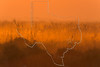 Sunrise Fog,<br /> Brazoria National Wildlife Refuge, Texas