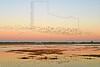 Geese and Ducks, Sunrise Flight, <br /> Brazoria National Wildlife Refuge, Texas