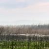 Dew, Attwater Prairie Chicken National Wildlife Refuge, April 13, 2013