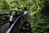 Rain Forest Express, Waitakere Ranges.