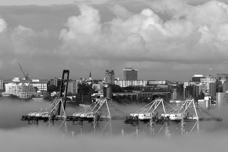 Auckland Cranes In The Fog