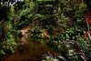 Huia Stream