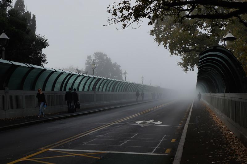 Grafton Bridge in the fog.