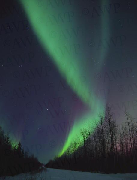 North Pole Nights