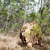 Termite mound in the Atherton Tablelands