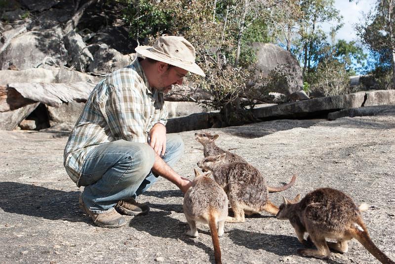 Andy Suarez feeding Mareeba rock-wallaby (Petrogale mareeba) at Granite Gorge Nature Park
