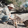 Andy Suarez feeding Mareeba rock-wallaby (Petrogale mareeba) at Granite Gorge Nature Park